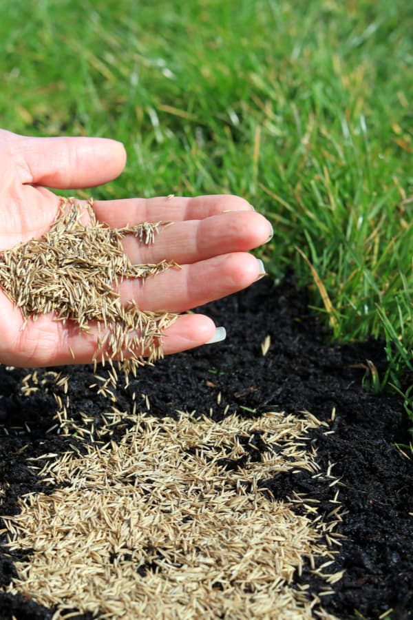 What Is Grass Seed