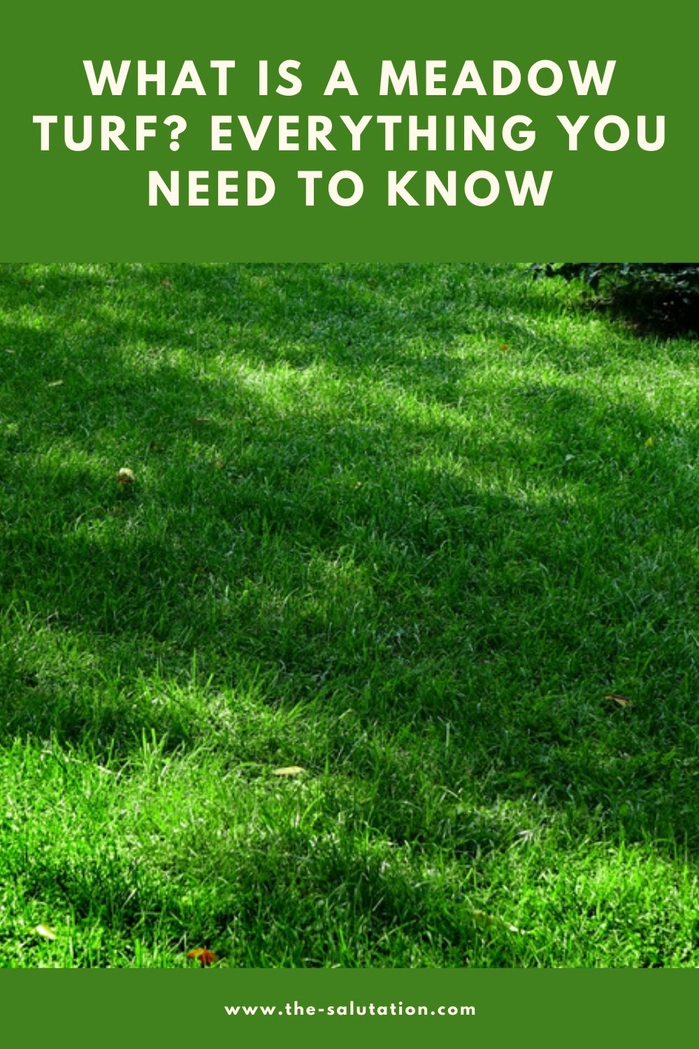 What Is a Meadow Turf Everything You Need to Know 2