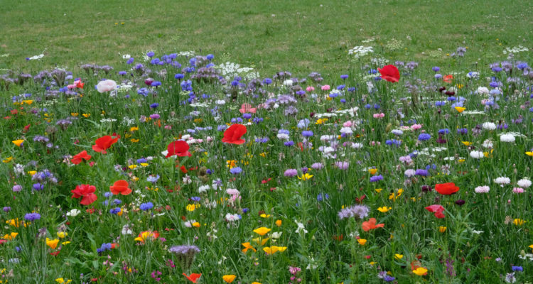 What Is a Meadow Turf? Everything You Need to Know