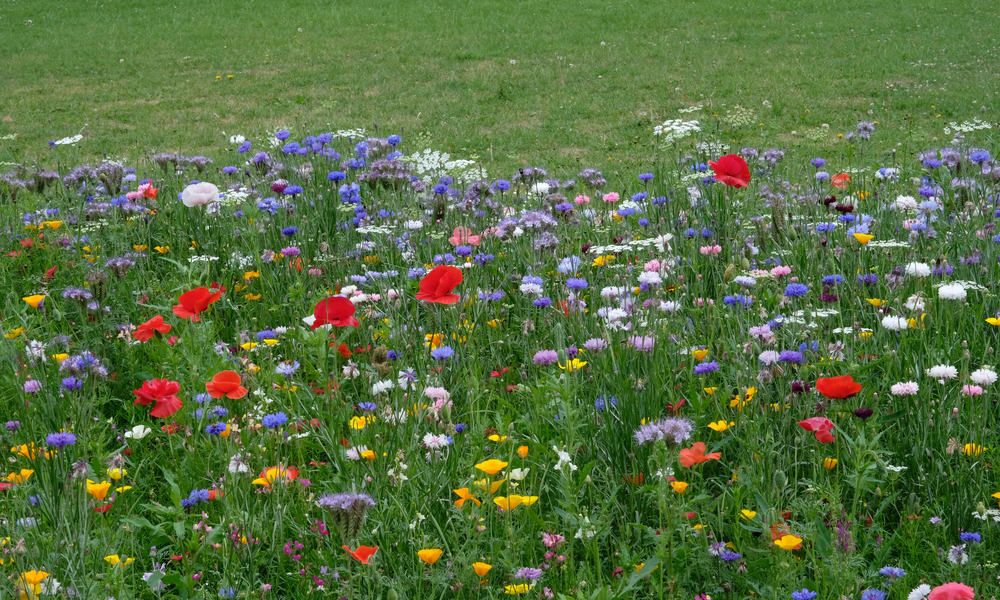 What Is a Meadow Turf Everything You Need to Know