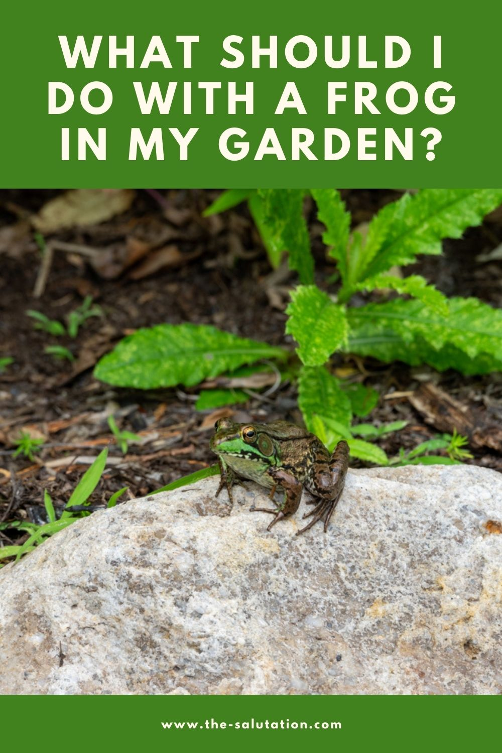 What Should I Do with a Frog in My Garden (13 Tips) 1