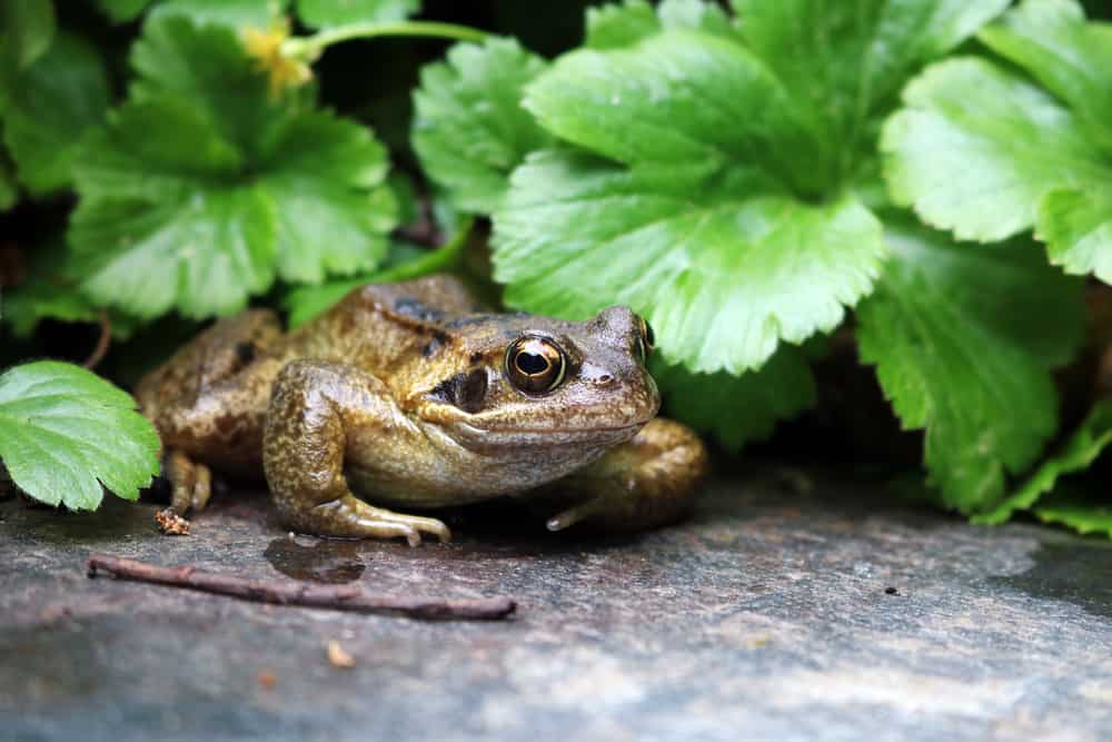 What Should I Do with a Frog in My Garden