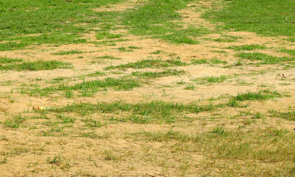 What are the advantages and disadvantages of Lawn Sand