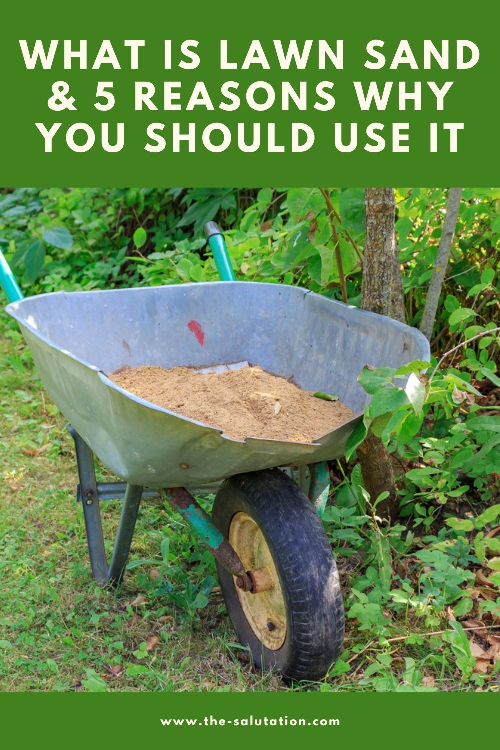 What is Lawn Sand & 5 Reasons Why You Should Use It 1