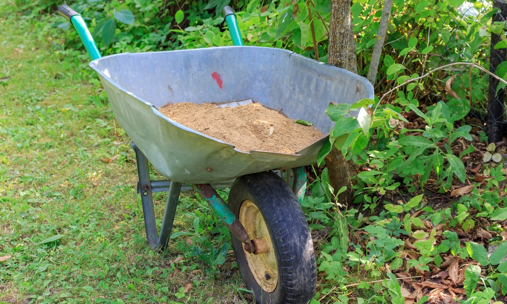 What is Lawn Sand & 5 Reasons Why You Should Use It