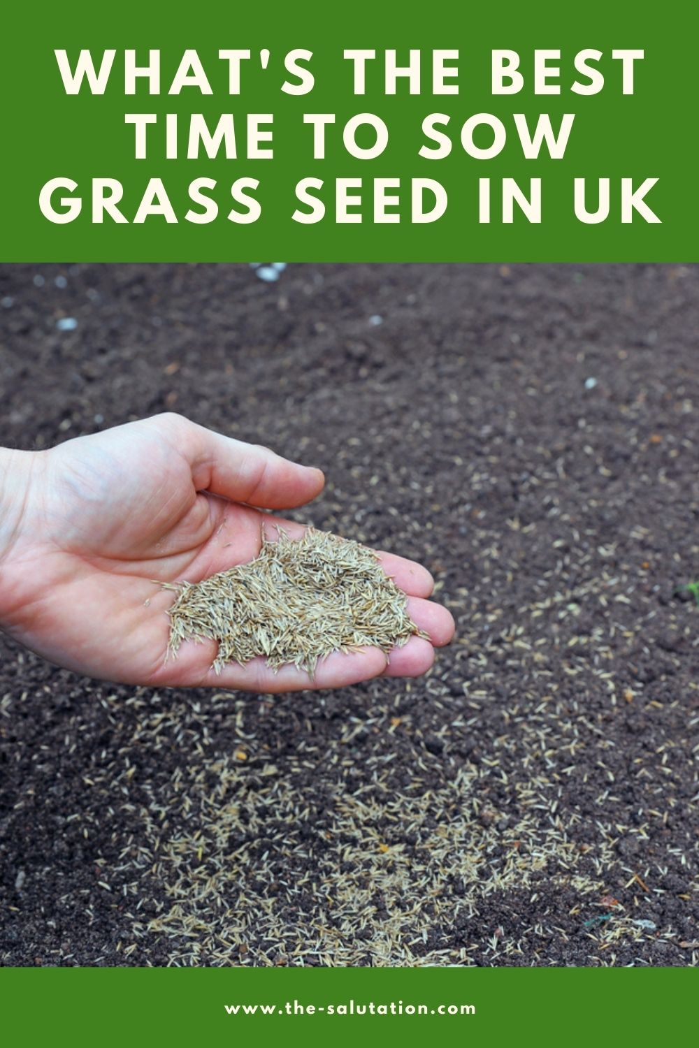 What's the Best Time to Sow Grass Seed in UK 1