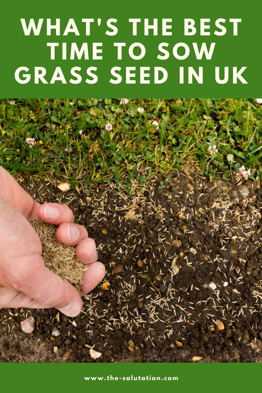 What's the Best Time to Sow Grass Seed in UK 2