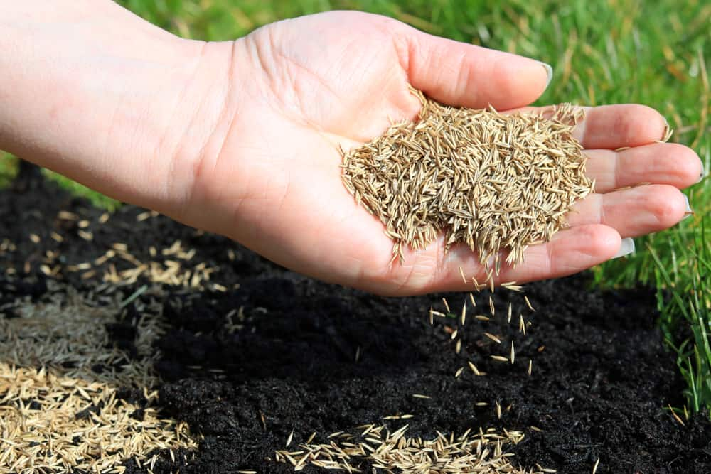 What's the Best Time to Sow Grass Seed in UK