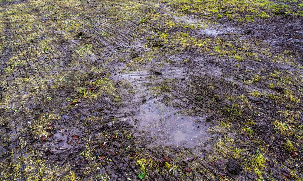 What's the problem with cutting wet grass