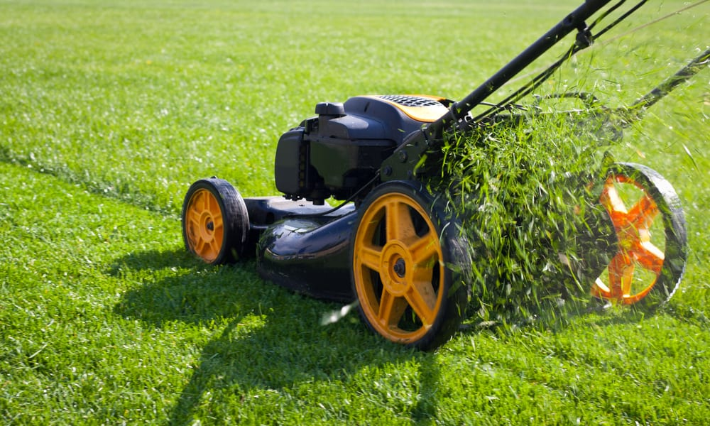 When to Mow the Lawn (7 Tips)