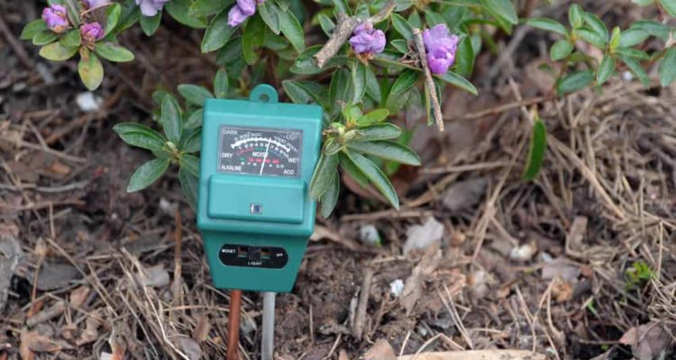 7 Best Soil Testing Kits of 2021 (UK) – Soil Ph Meter & Tester